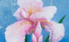<b>Lilies</b>
